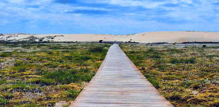 la duna movil