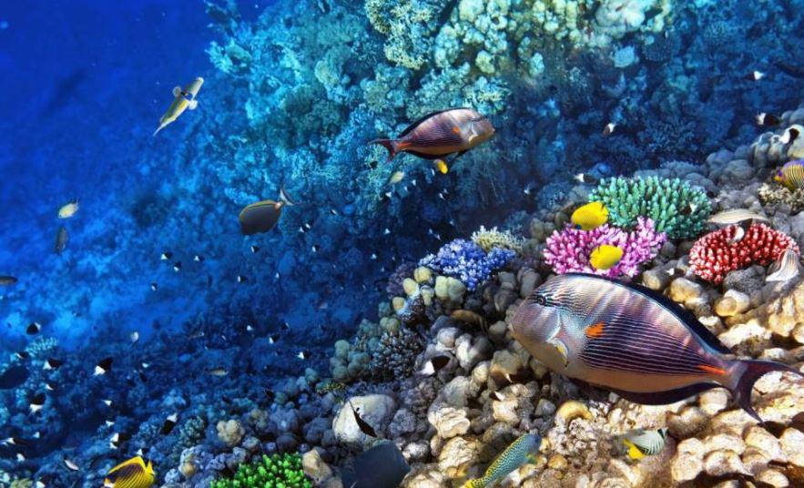 Arrecifes coralinos de Roatan