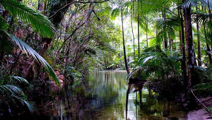 Selva de Daintree