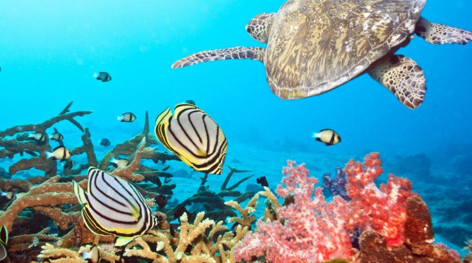 arrecifes de coral mas impresionantes del mundo